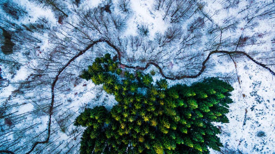 dronestagram-nature-forest-Denmark